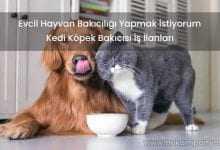 Evcil Hayvan Bakıcılığı Yapmak İstiyorum Kedi Köpek Bakıcısı